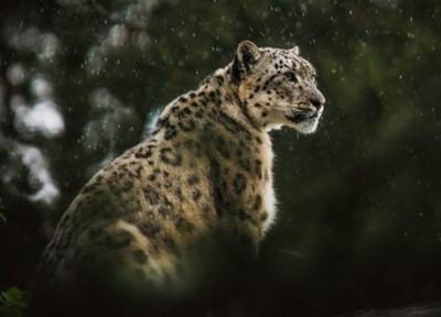 El tesoro del jaguar